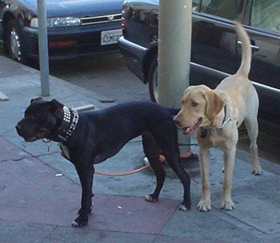 Animal Planet Dogs 101 Rottweiler